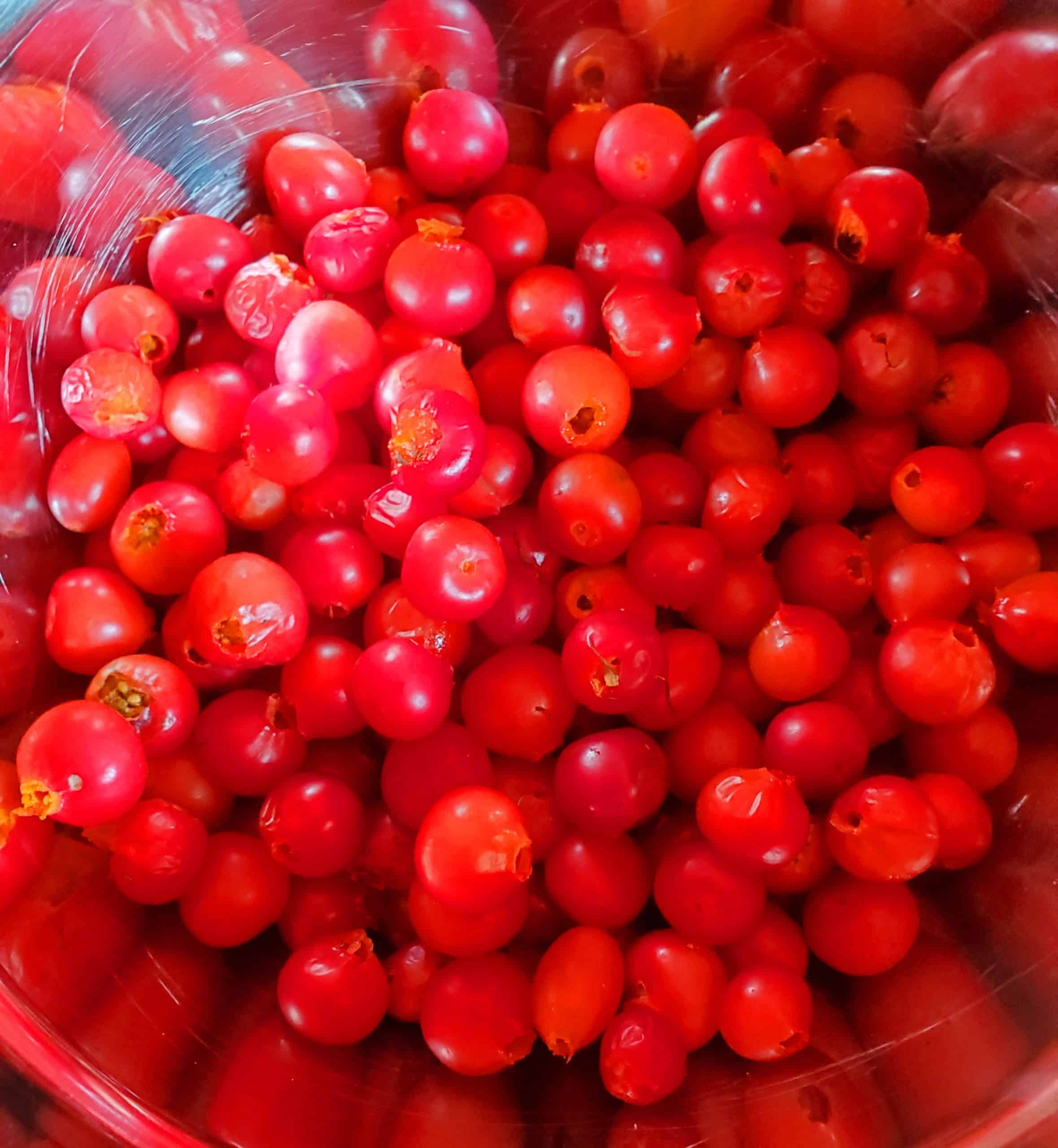 a bush of highbush cranberries